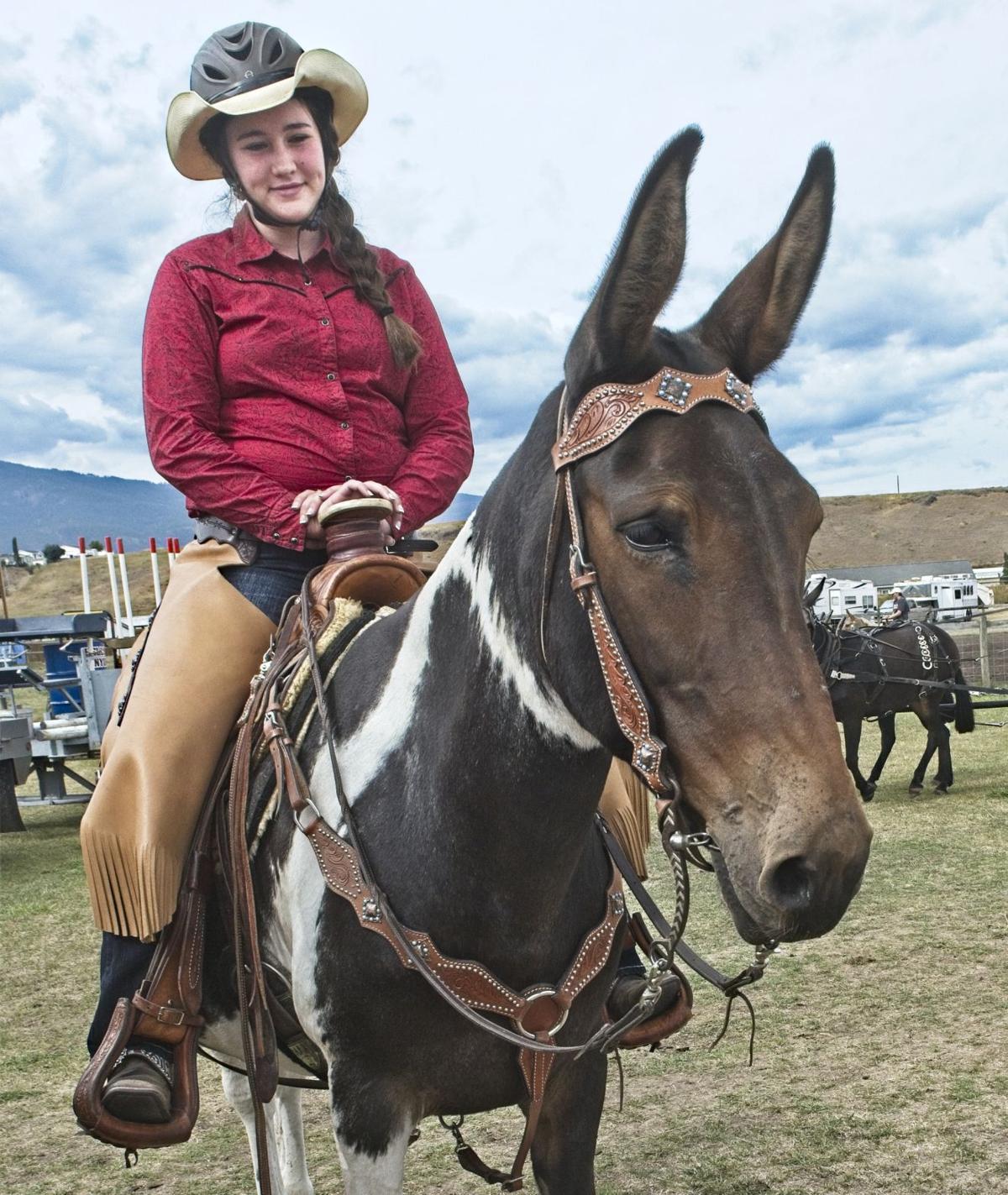 Mule days girl and paint mule.jpg