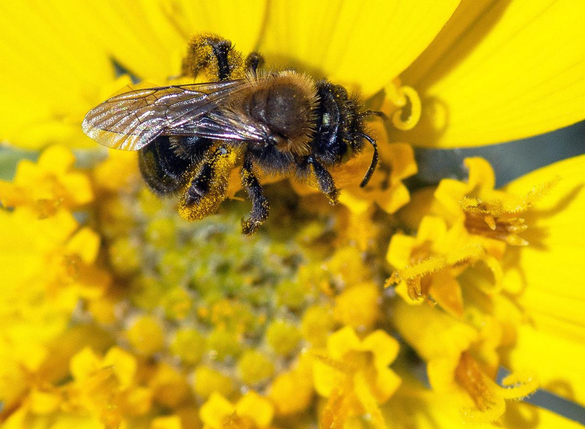 Planting for Pollinators: It takes work but it's worth it