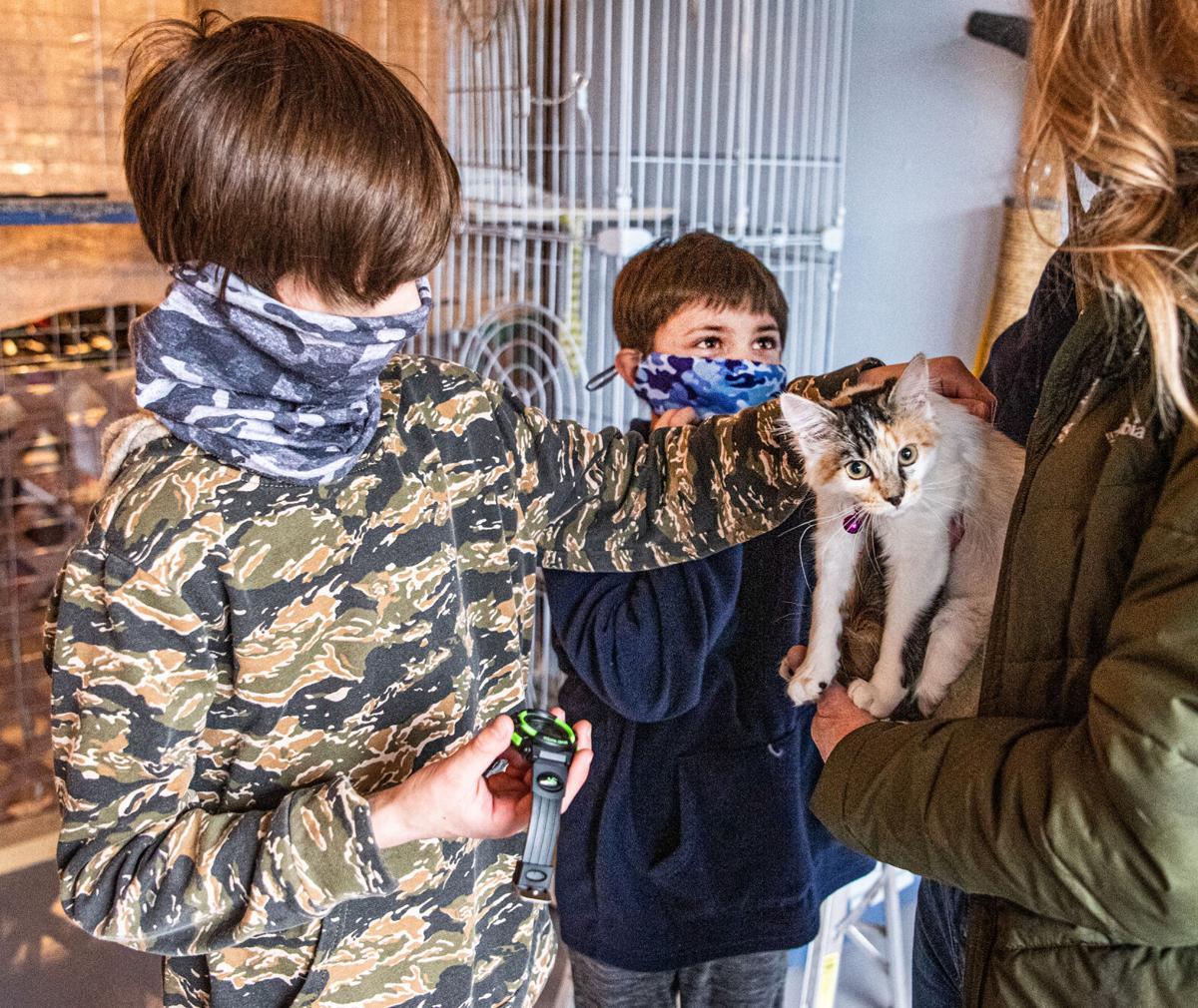 3 Humane Soc cat party 7P .jpg