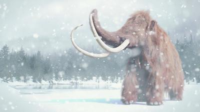 Mammoth in snowstorm