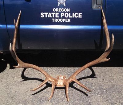 Sentence handed down in elk poaching case.