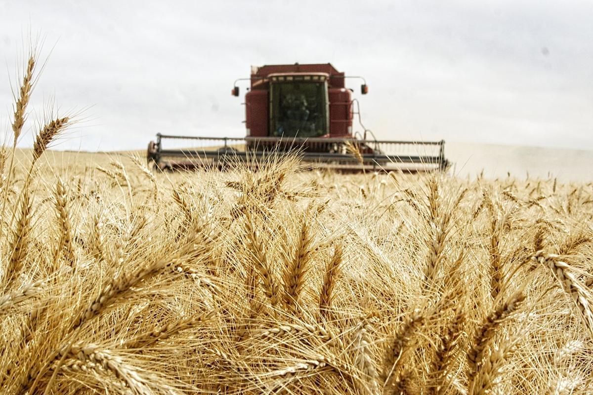 Wheat Harvest 092519.jpg