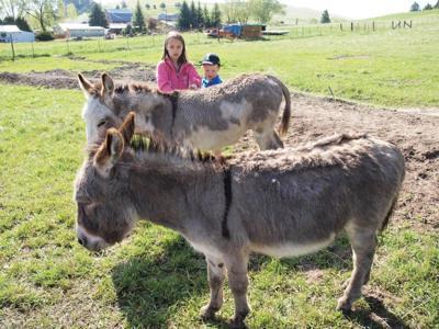 Mini-donkey friends