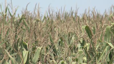 Officials talk fertilizer plant impact