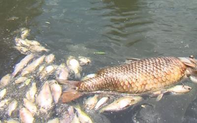 Lake Iroquois suffered a huge fish kill