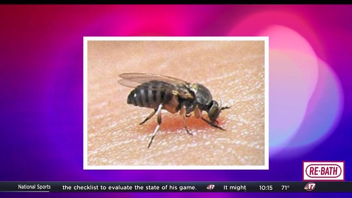 Buffalo gnats bring threat of bites in spring   Top ...