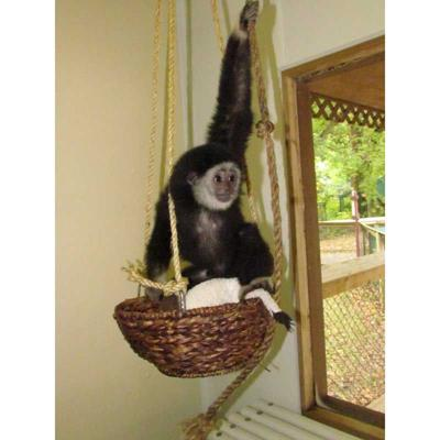 Henson Robinson Zoo welcomes new addition