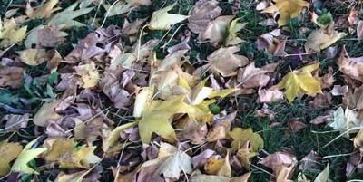 Springfield leaf collection services to begin April 13