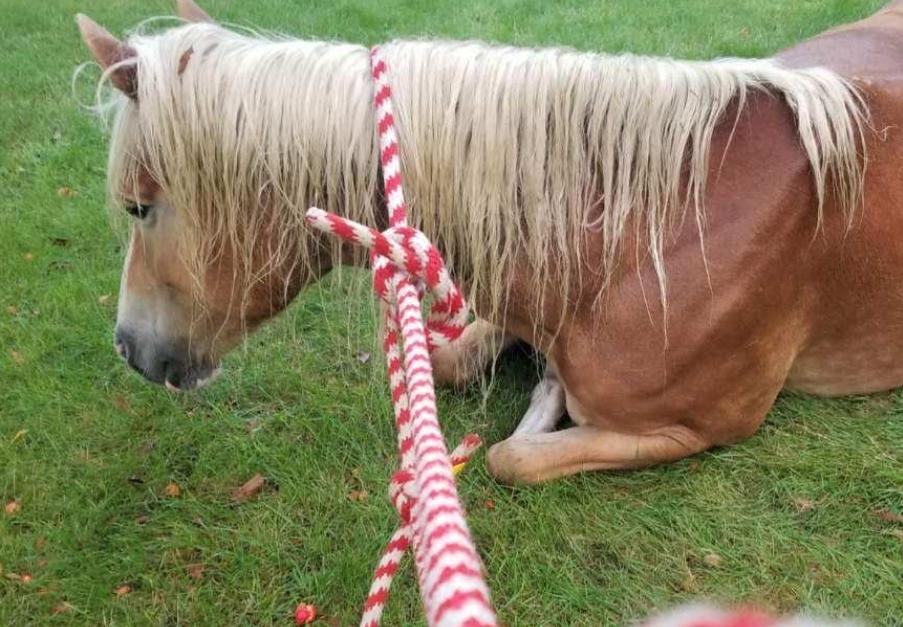 Tuscola horse visit 2