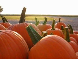 Local pumpkin patch named among Top 10 in Illinois