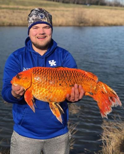 20 pound goldfish