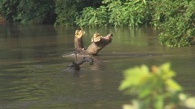 Kayakers Rescued from Sangamon River