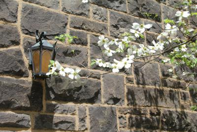 Old Main Spring