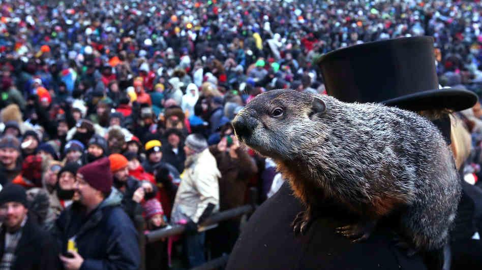 Groundhog Punx Phil