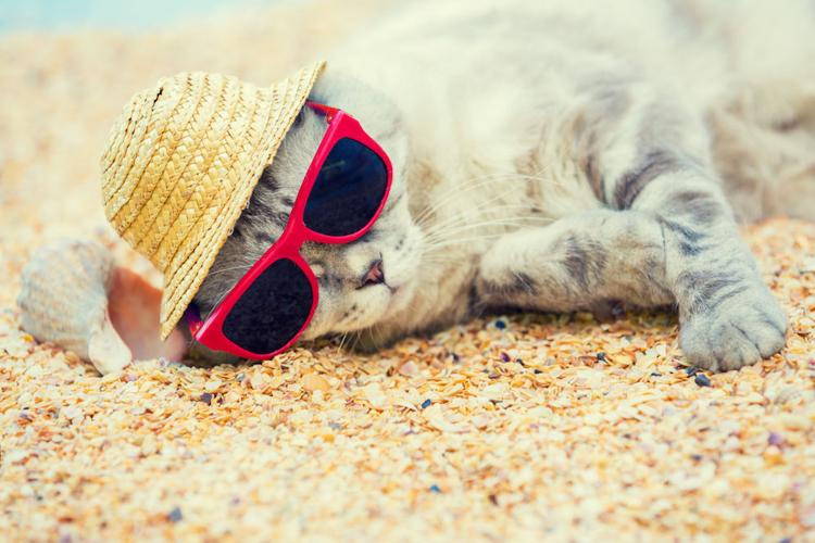 Cat wearing sunglasses and sun hat relaxing on the beach