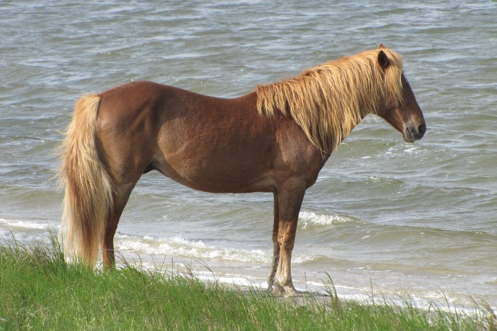 The Assateauge Incident