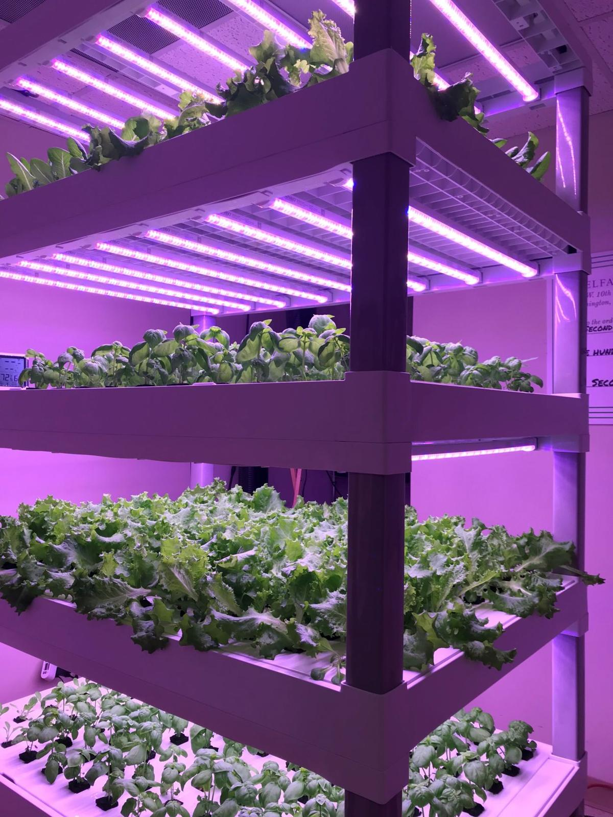 WLM vertical indoor farm