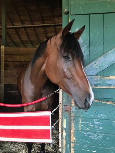 Escape Clause relaxes in her stall at Delaware Park ahead of Saturday's Delaware Handicap