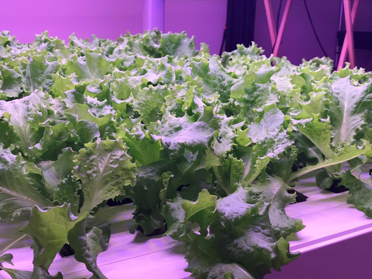 WLM indoor urban farm