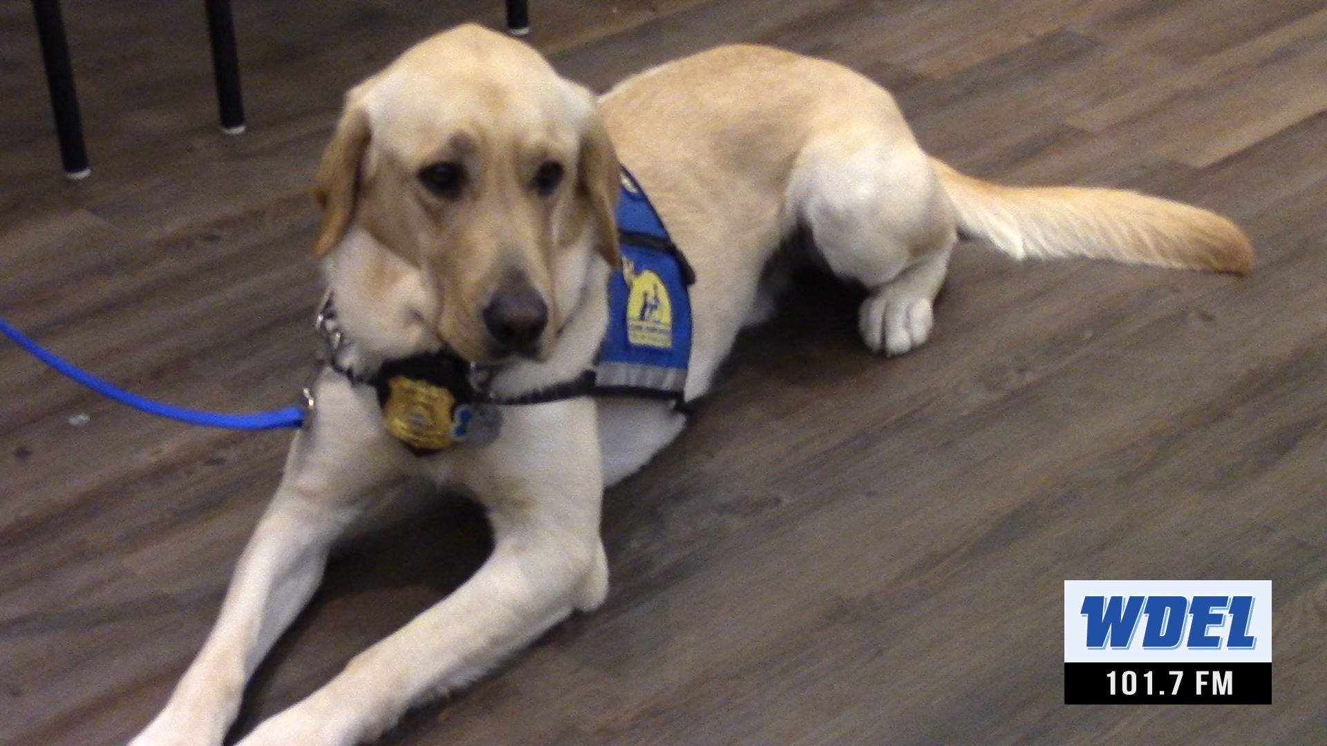 VIDEO   New Castle County Police dog to sniff out sadness and bring smiles   WDEL