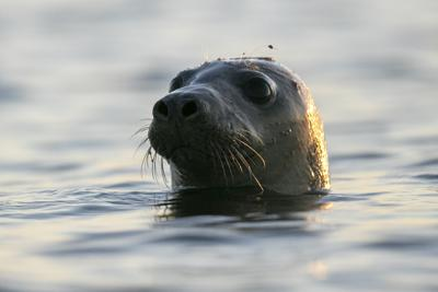 Too Many Seals?