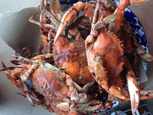 Chesapeake Bay crab shortage taking its toll inside Delaware's restaurants