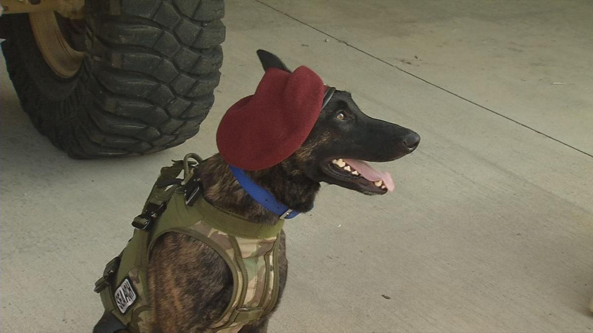 Callie, the Department of Defense's only search and rescue dog