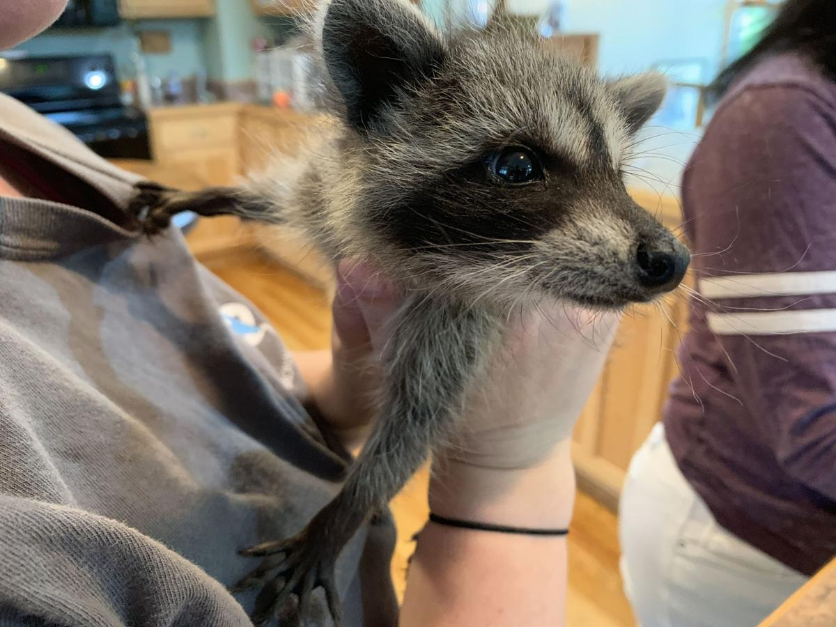 SECOND CHANCE WILDLIFE BABIES - KEITH KAISER - 6-18-19 (8).jpeg