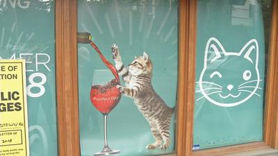 Cat lovers!  Two 'cat cafes' to open soon in Louisville