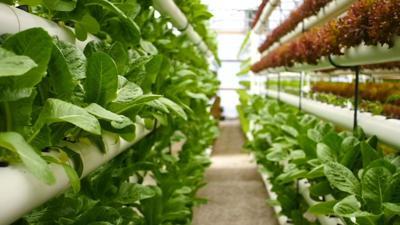 Mount Washington farm uses unique process to grow produce for Churchill Downs