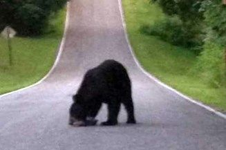 Officials tracking bear in Corydon, Indiana
