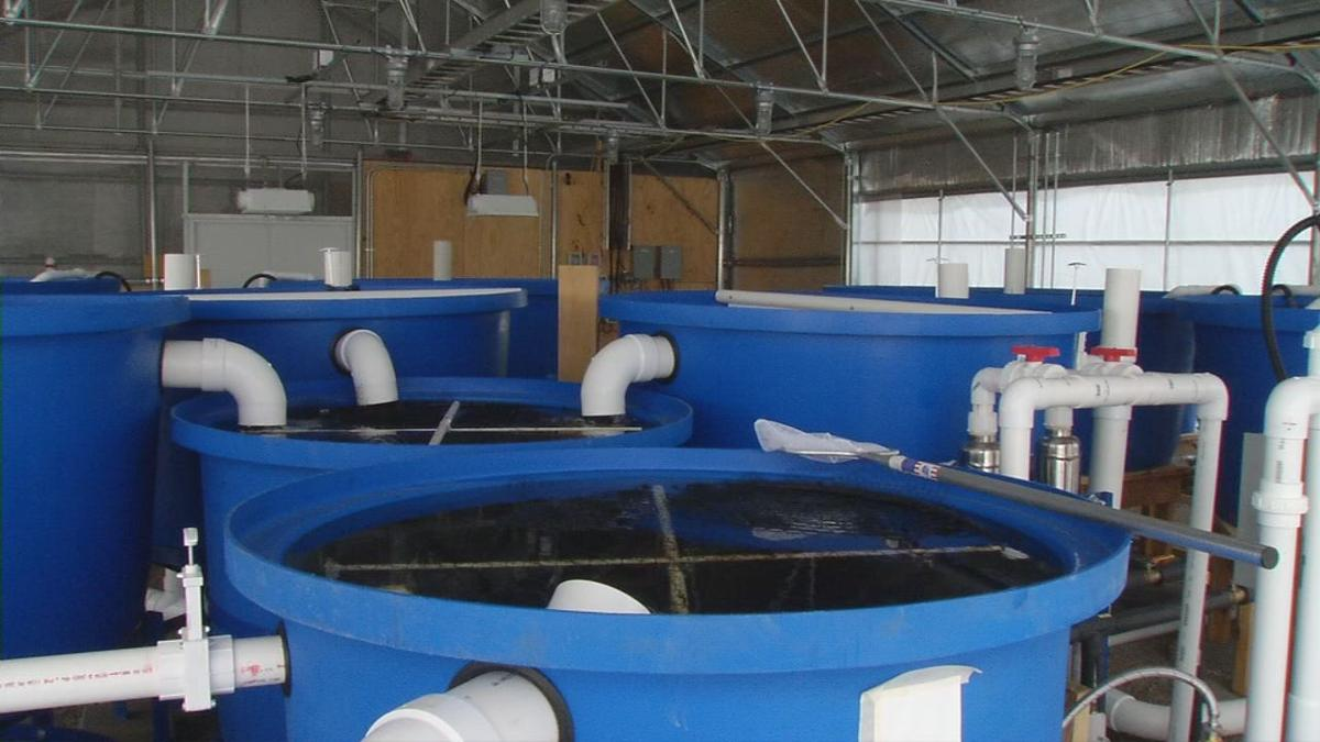 Aquaponics tanks in Shelbyville