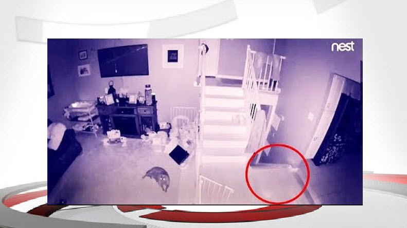 New York home security camera catches a 'ghost' with 'pet