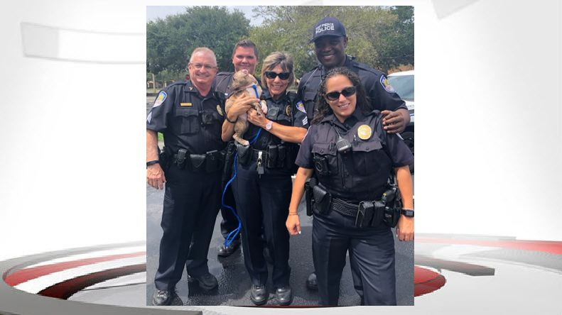 Fort Pierce Police Rescue Puppies