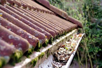 Preparing for Fall: Maintaining Your Home for the Coming Season