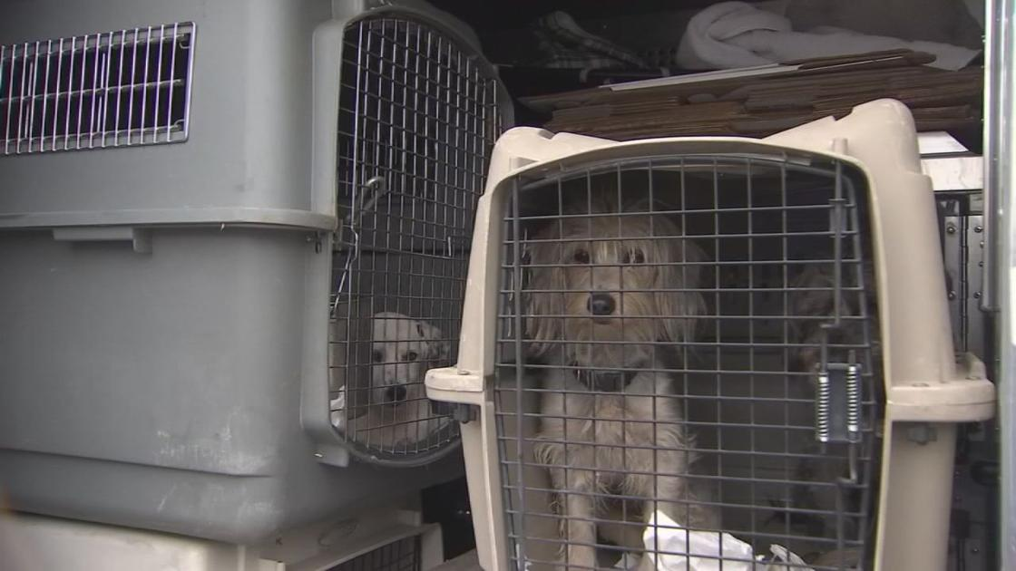 Stolen van full of rescue dogs, including one from Kentucky, recovered in California
