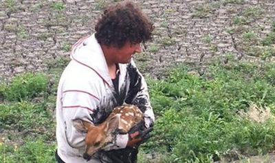 Man rescues tired fawn from drying sewer sludge in Montana