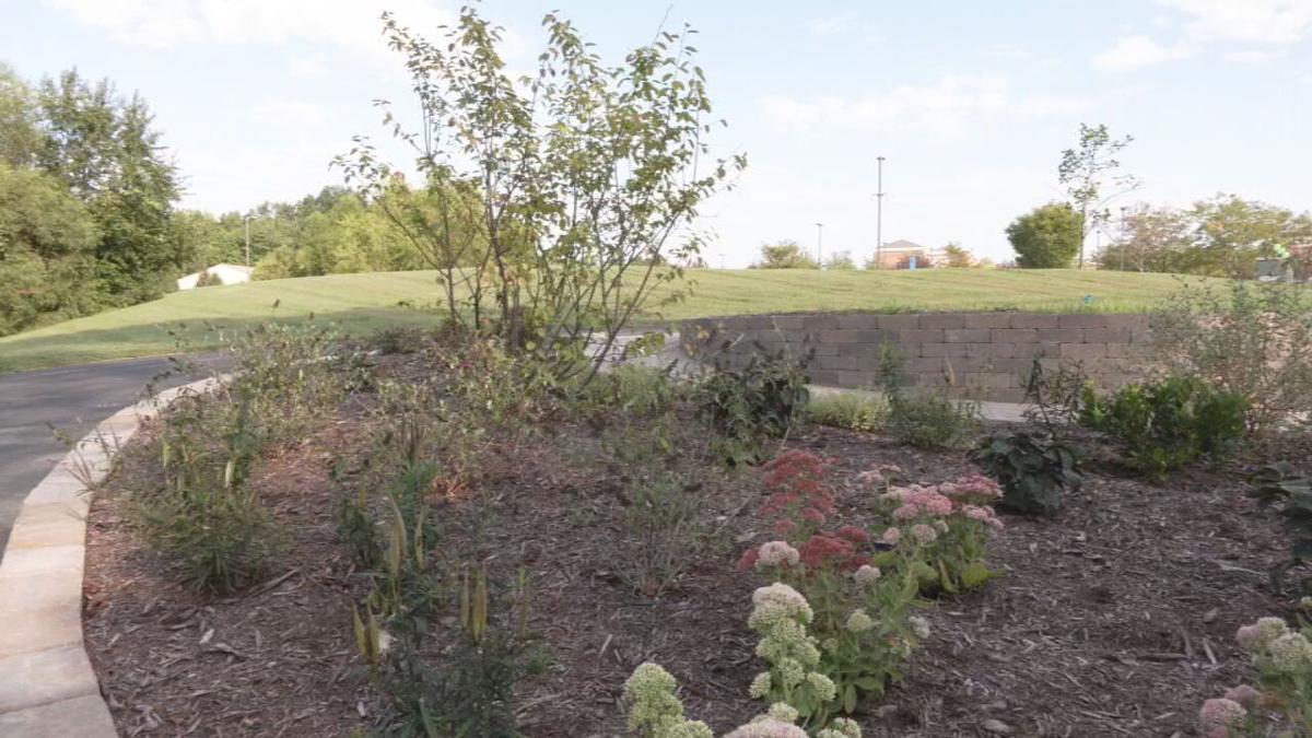 Memorial garden plants
