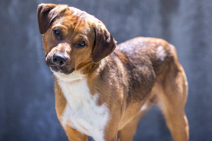 Rocket, dog from Kentucky Humane Society.jpg