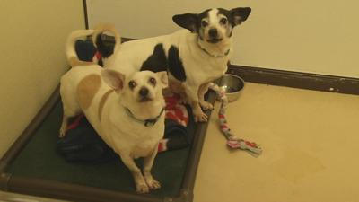 Louisville Animal Shelter In Desperate Need For Blankets For Dogs