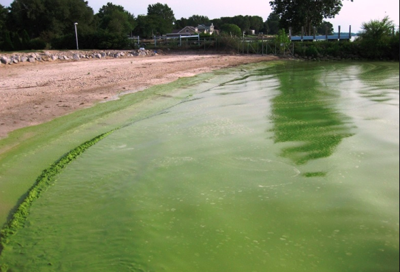 Understanding Blue-Green Algae and Precautions to Take