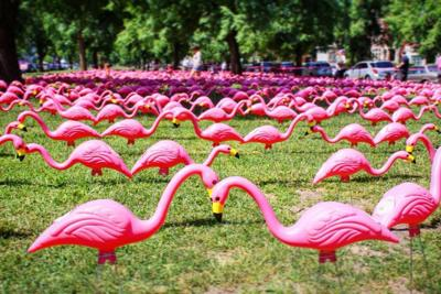 Buffalo's Olmsted Parks celebrates 150 years with pink flamingo record