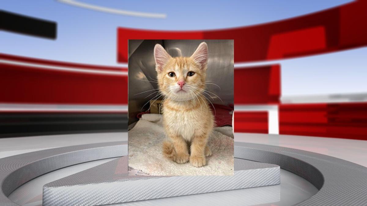 Komatsu kitten headshot.jpg