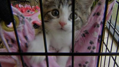 Hardin County Animal Shelter working with Louisville non-profit to stem influx of stray cats