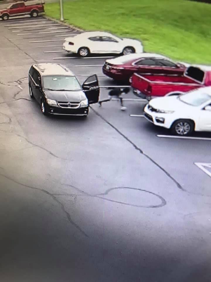 Scottsville car break-ins surveillance video 2.jpg