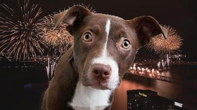 Pets scared by Thunder Over Louisville