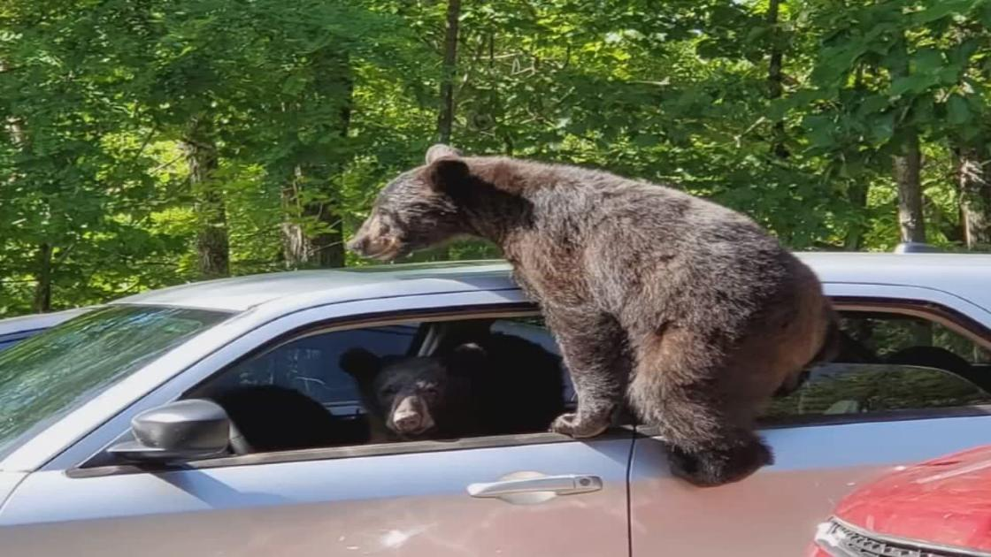 Kentucky man's car got 'hijacked' by family of bears in Gatlinburg, Tennessee