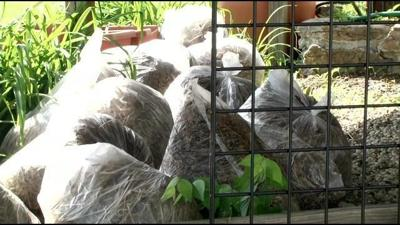 Proposed ordinance would overturn ban on plastic bags for yard waste
