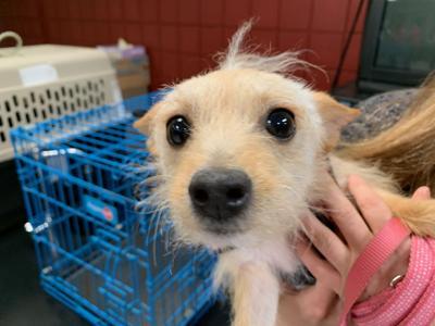 Assumption Pet Adoption Fair KK 4-23-19