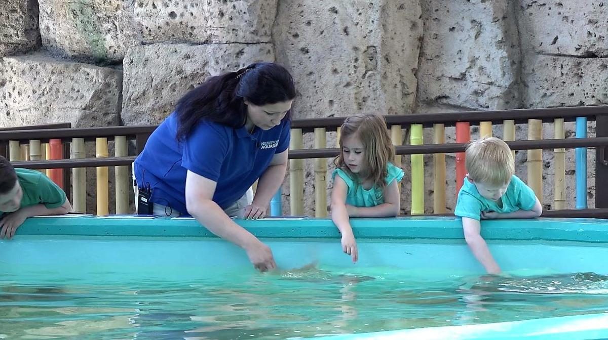 Newport Aquarium - Kids with Biologist